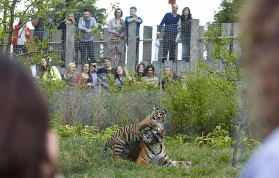 """On Friday nights throughout the summer, London Zoo hosts """"Zoo Lates"""" parties, where gates open at 6 pm and revellers can drink and be merry in and around the enclosures, enjoying activities such as animal talks, comedy performances and a silent disco. London, 11/07/14"""