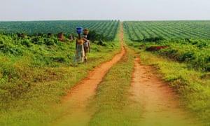 Feronia's Yaligimba palm oil plantation in DRC.