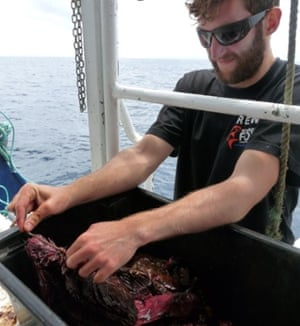 Preparing the 'chum' of fish guts whose scent will lure the sharks.