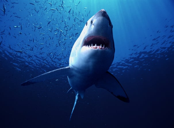 Diving with the shark attack survivor who filmed Jaws   Travel   The