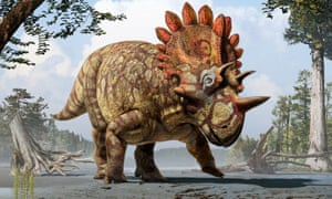 An artist's reconstruction of the new horned dinosaur <em>Regaliceratops peterhewsi.</em>