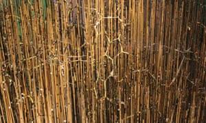 Kendrew's myoglobin model buried in a forest of rods
