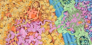 David Goodsell's painting of the cell nucleus