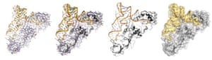 Computer-generated representations of protein and RNA in a molecular embrace (an aminoacyl tRNA synthetase)