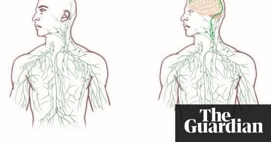 Newly discovered vessels beneath skull could link brain and immune ...
