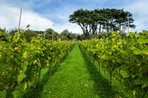 Holy Vale vineyard