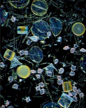 Diatom and Dinoflagellate bloom in Toba Bay