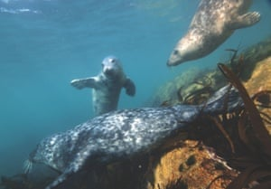 Snorkelling with seals off St Martin's