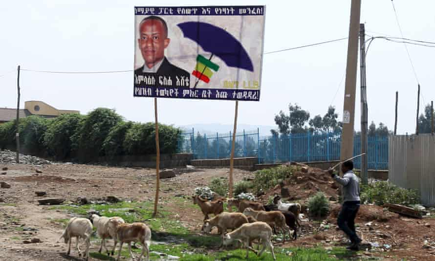 A man herds his animals near a billboard of Blue Party candidate Amlaku Fiseha Ishete on the outskirts of Ethiopia's capital Addis Ababa,