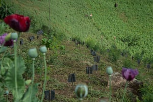 Here, opium poppy and coffee plants are cultivated simultaneously on the same field in Loilem. Originally, the UNODC staff found it hard to gain the trust of the poppy farmers but eventually they began working together.