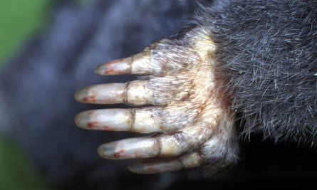mole digging paw