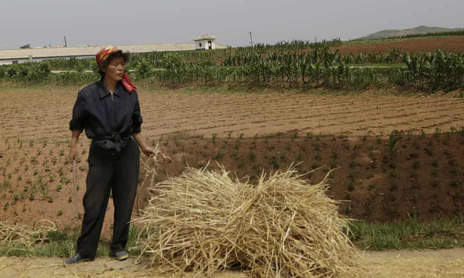 A farmer stands in front of a field in South Hwanghae province North Korea. In other parts of the country, rains have eased the drought that has been called the worst for a century, according to South Korean officials.