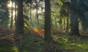 The public defeated plans to privatise forests because of what trees symbolise about a community.