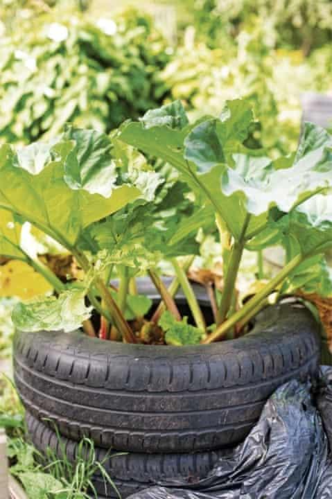 Gardens: tyre