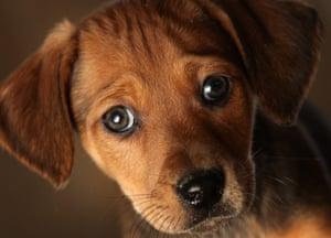 Dog Rescue Centres Near Manchester