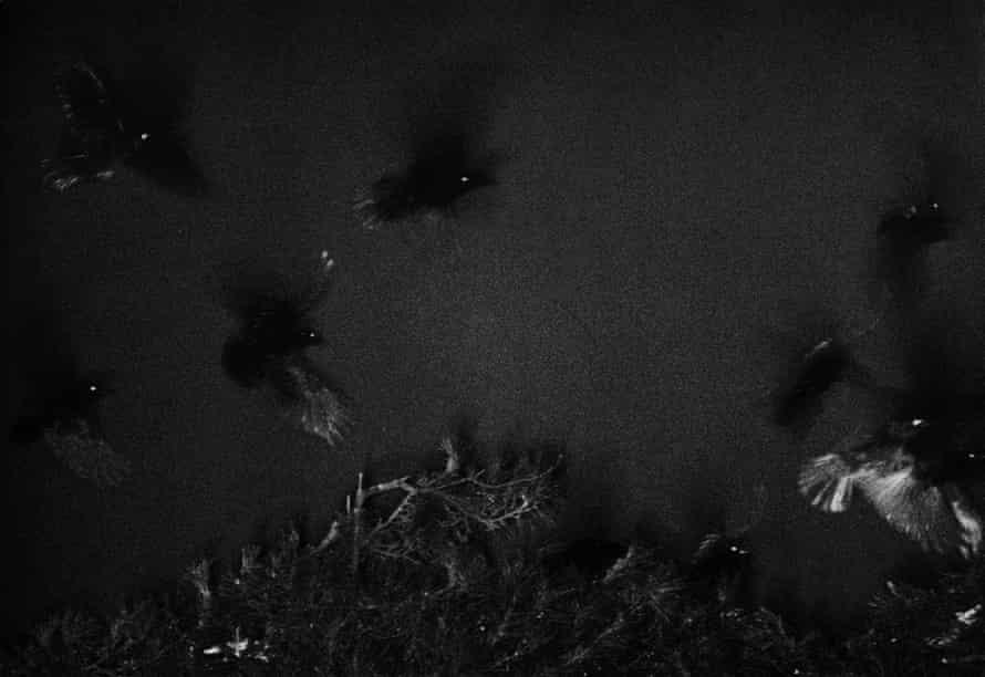Masahisa Fukase. Image from The Solitude Of Ravens
