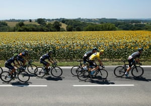 Chris Froome in the yellow jersey heads past the sunflowers.