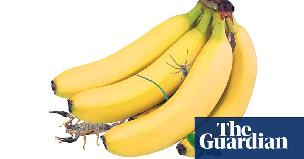 Scorpions, spiders and lizards: when did buying bananas become so