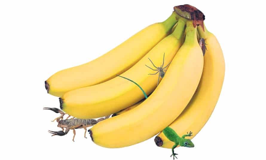 Bananas with creepy crawlies