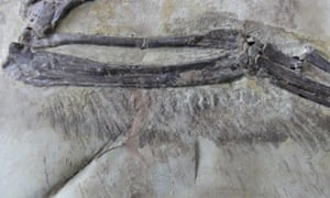 A close-up view shows the wing feathers of short-armed Zhenyuanlong suni