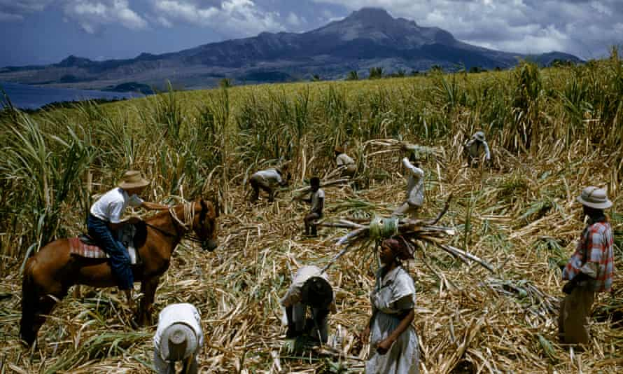 A mounted overseer directs sugar-cane cutters in a field, near Le Carbet, Martinique.