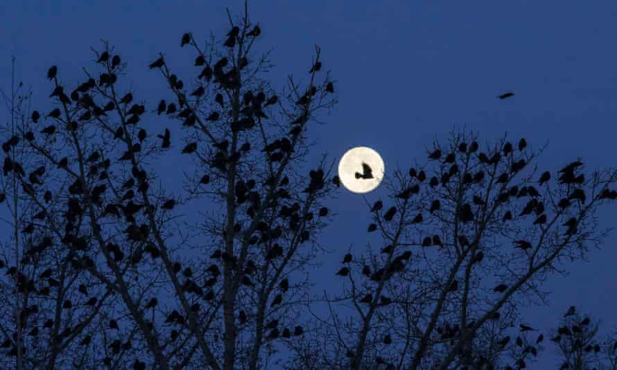 Flock of birds at night in northern Kazakhstan