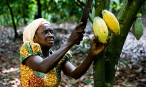 Companies such as Theo Chocolate and Nespresso are working with local communities in South Sudan and the Democratic Republic of Congo to build sustainable cocoa bean supply chains.
