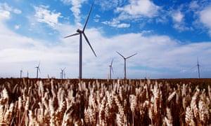 Wind turbines in a field of corn