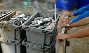 Thai fishmongers at work in Bangkok. Exports to the EU market could be hit if Thailand fails to curb illegal fishing and slave labour, an MEP on the European parliament's fisheries committee has warned.