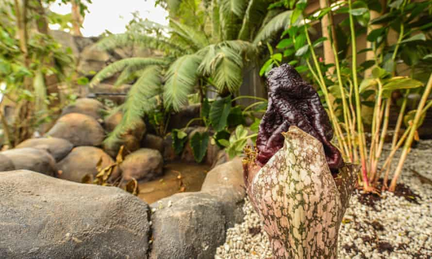 The tropical flora is impressive but will take a while to truly establish itself at the zoo