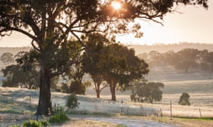 Gum trees by Brooks Lookout, Clare valley