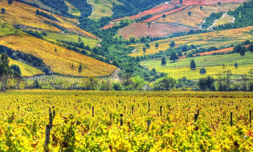 Vineyards in the Colchagua valley