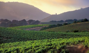 Sonoma valley vineyards California.