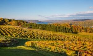 Vineyards near Keuka Lake