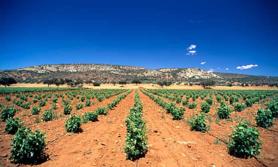 La Mancha vineyard