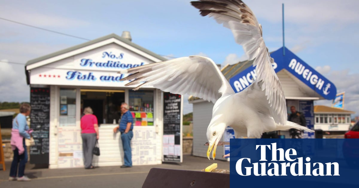 The Mystery Of The Poisoned Seagull Is This The Start Of The Fightback Environment The Guardian