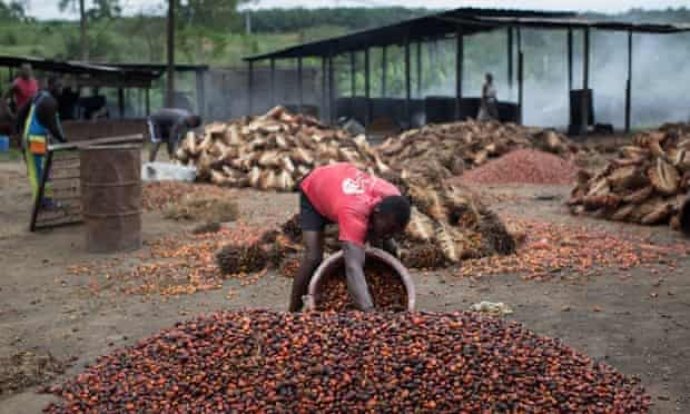 A man works in a factory yard filling a basket with palm oil seeds
