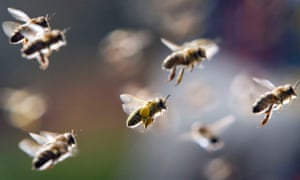bees returning to their hive