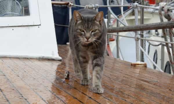Mickey, Smillie's cat.