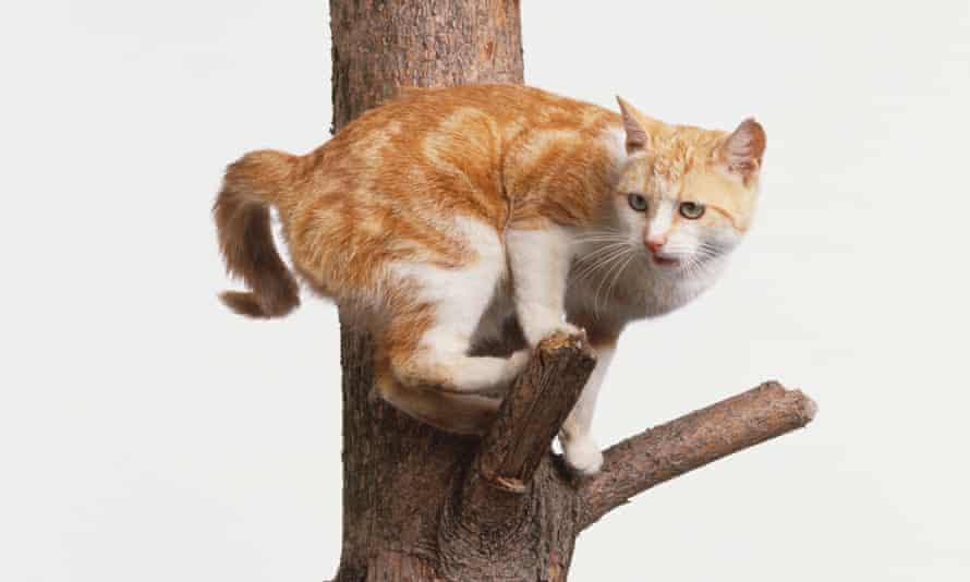 Cat balanced on the branch of a tree