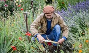 Dan Pearson dividing irises