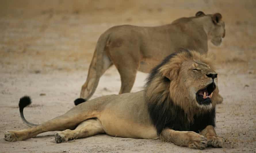 Cecil the lion Jenkins