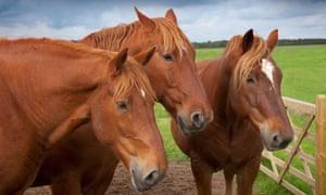 Three farm horses