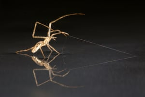 A spider anchors itself with a strand of silk