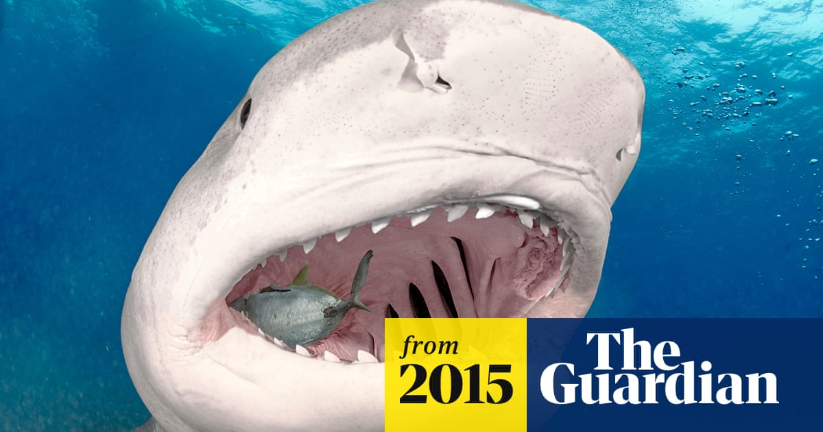 Sharks Haunt North Carolina S Fourth Of July But Experts Say Attacks Are Rare Sharks The Guardian