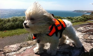 Uanín (means little lamb in Irish) loves nothing better than to go boating whilst on holiday. Safety first though!