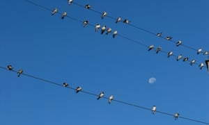 Swifts on a telephone wire. As Cowen watches them he feels a sharp connection to the rhythms of nature.