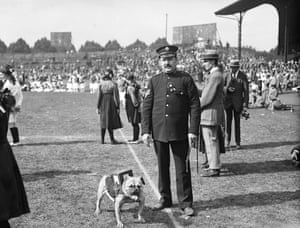 September 1918:  A bulldog with a collection box strapped to his back on a sports day at Stamford Bridge in aid of disabled men, just before the end of the first world war.