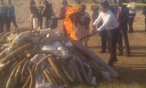 Minister Celso Correia lighting ivory and rhino horn in Maputo, Mozambique.