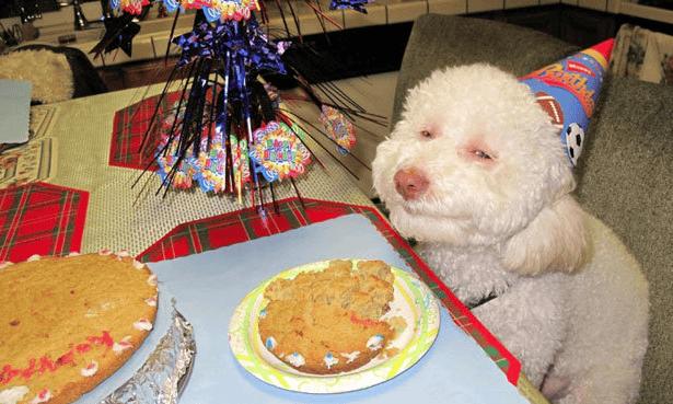 Riley the birthday dog meme